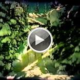 Embedded thumbnail for Alf Engen